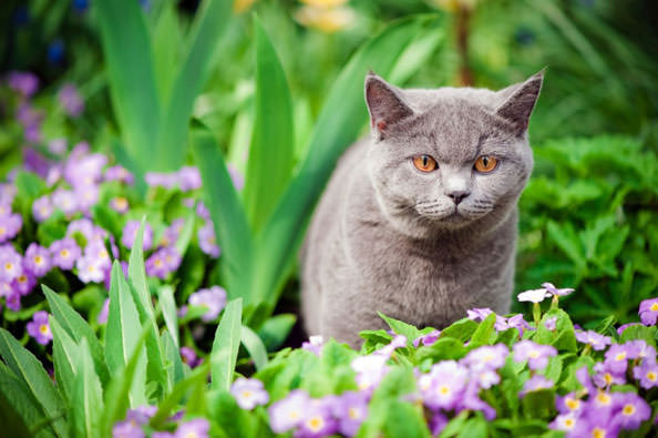 Plants To Stop Cats Pooping In Your Garden