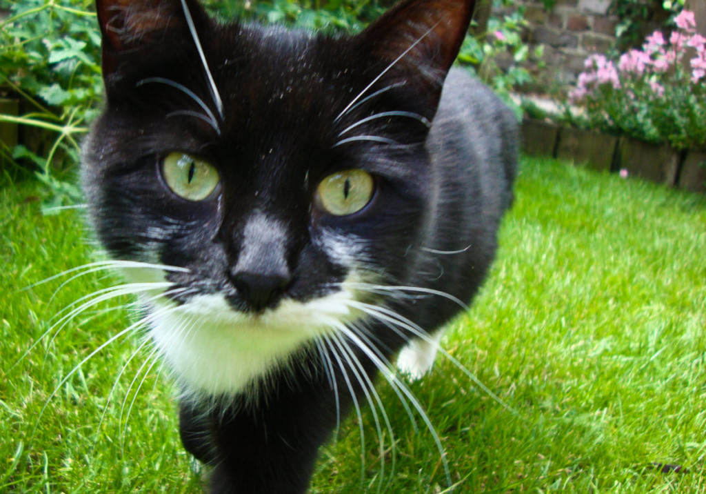 How to choose the right cat deterrent The Scaredy Cat