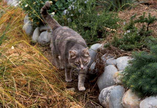How to stop cats pooping in your garden The Scaredy Cat