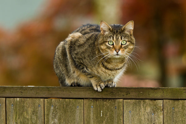 cat-on-a-fence