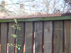 How To Help My Cats To Get Over Fence