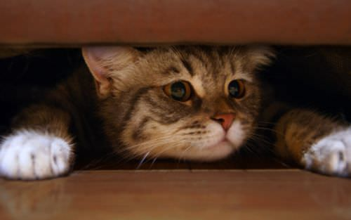 What S The Best Cat Scarer On The Market The Scaredy Cat